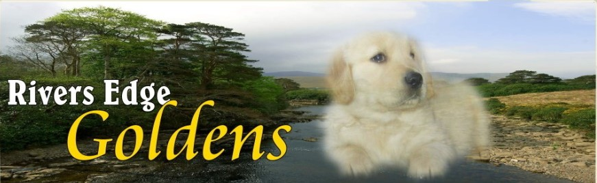 Rivers Edge Goldens